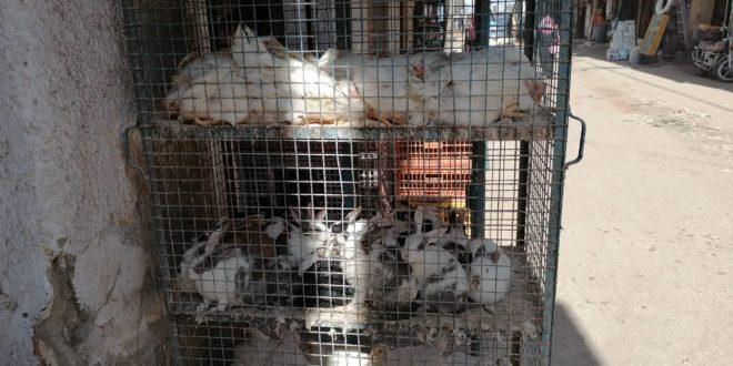 أسعار الدواجن والطيور