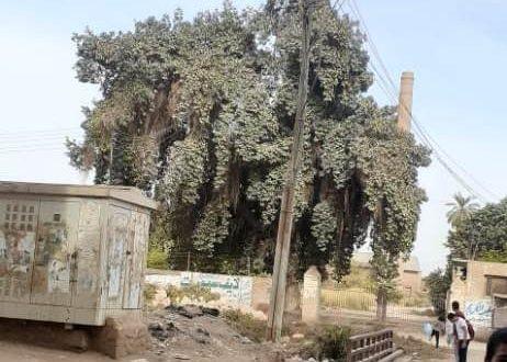 مجلس المدينة في نجع حمادي