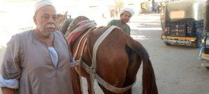 حدوة الحصان في قنا